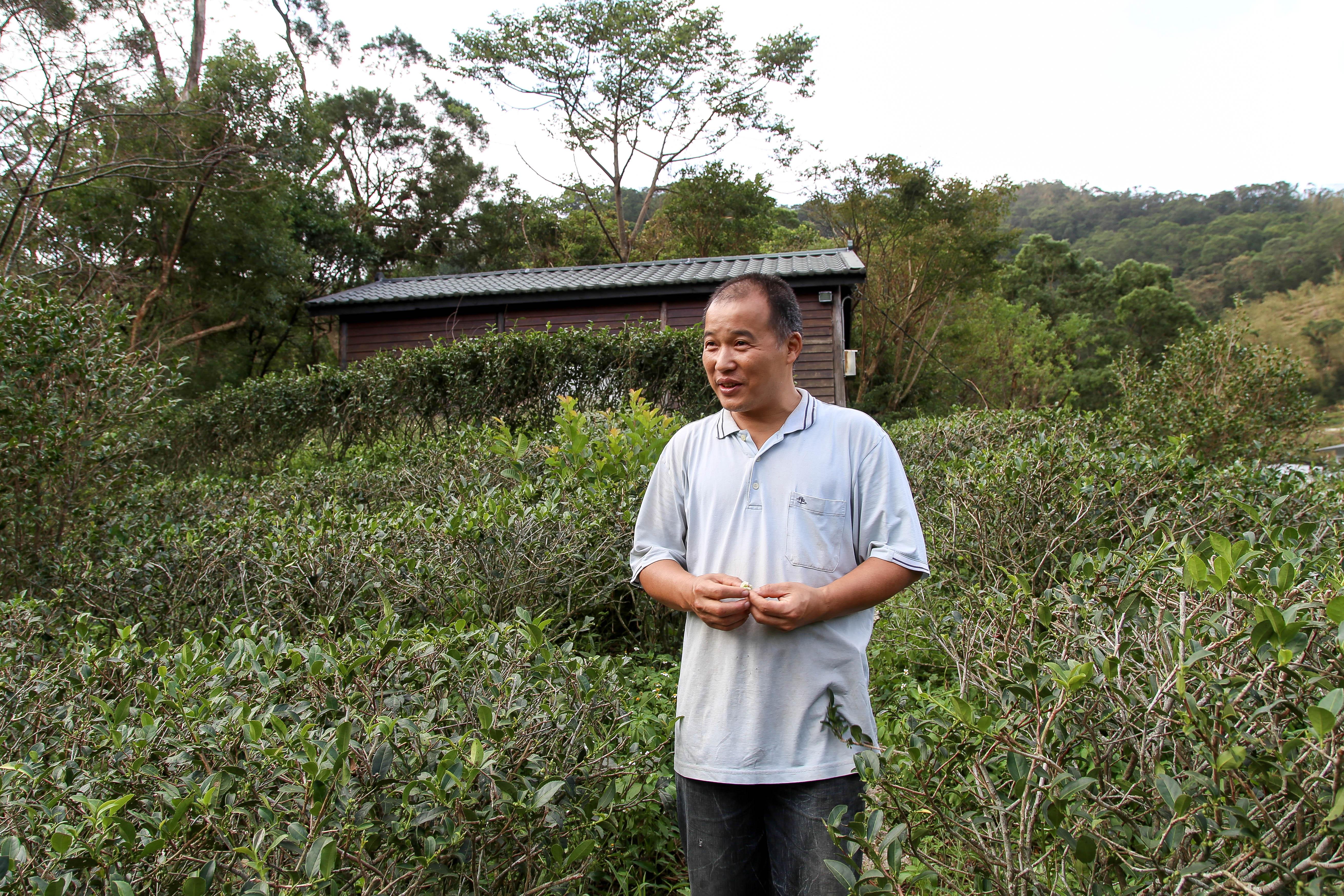 張福欽表示,務農人的生活節奏慢,茶葉從幼苗到產出要兩三年的時間,種茶人的生活不能太斤斤計較。攝影/胡皓宸