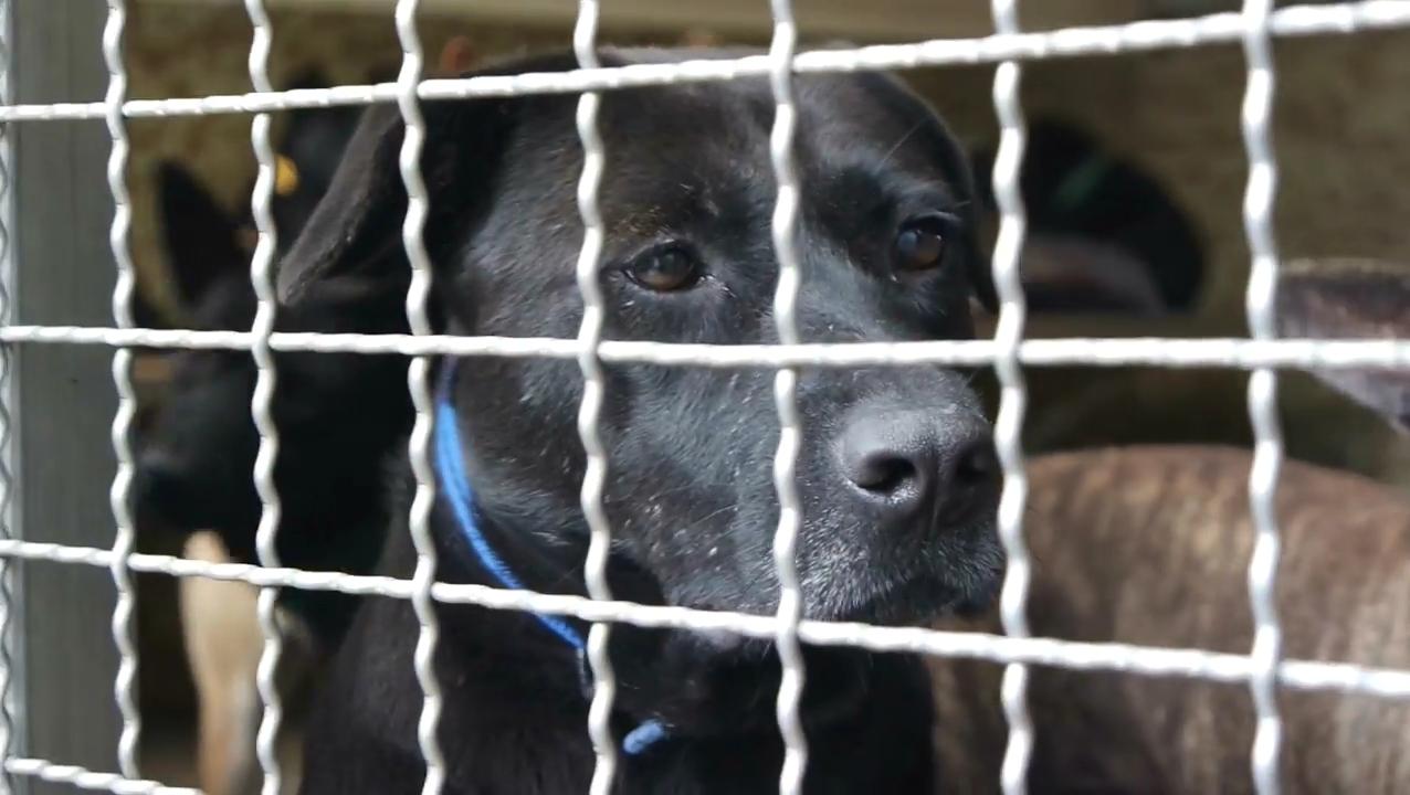 新北市板橋區動物收容所的流浪犬。(攝影/吳冠輝)