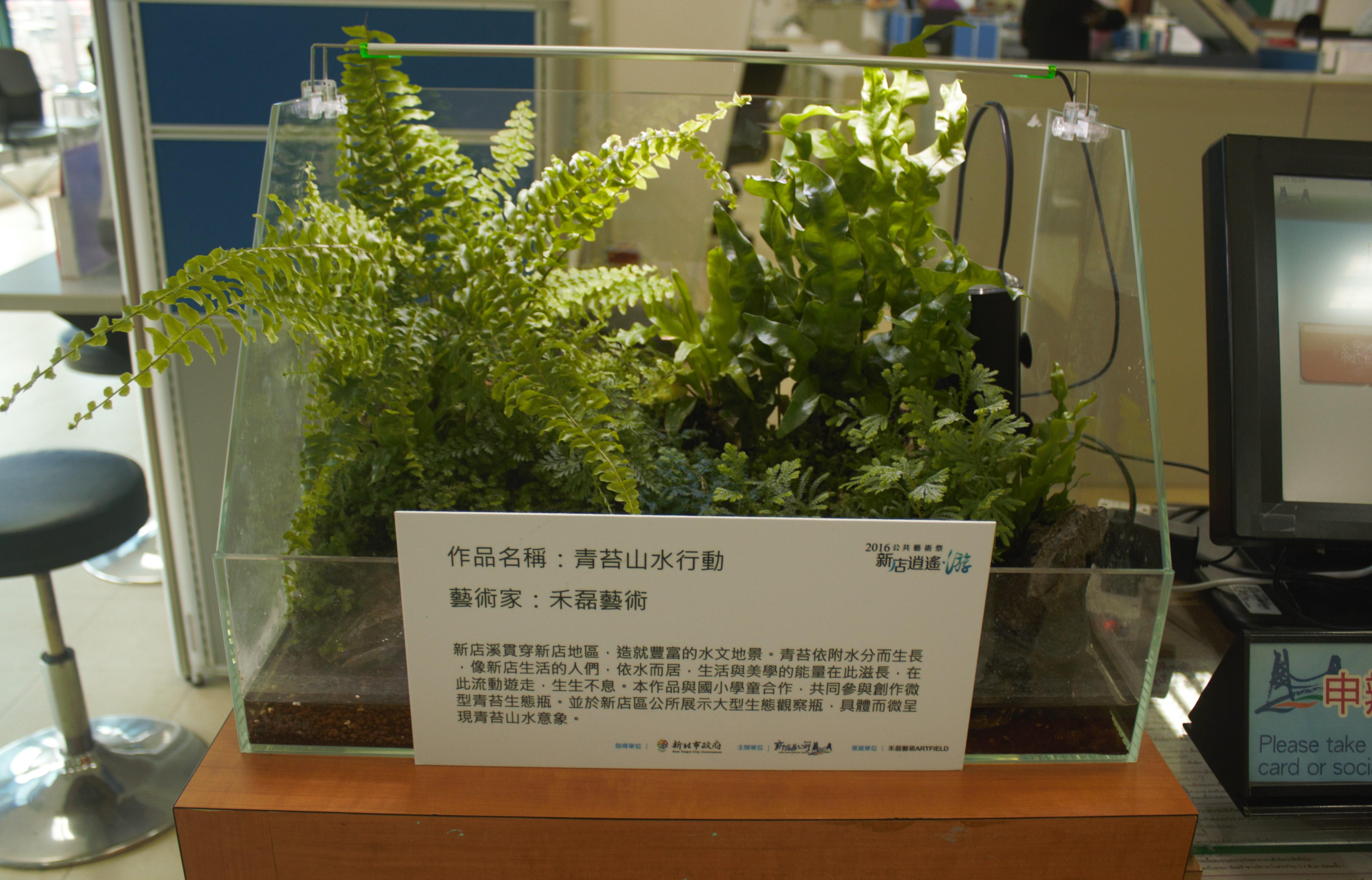 至於新店區公所內的「青苔山水行動」的小型生態箱。攝影/林韋宏