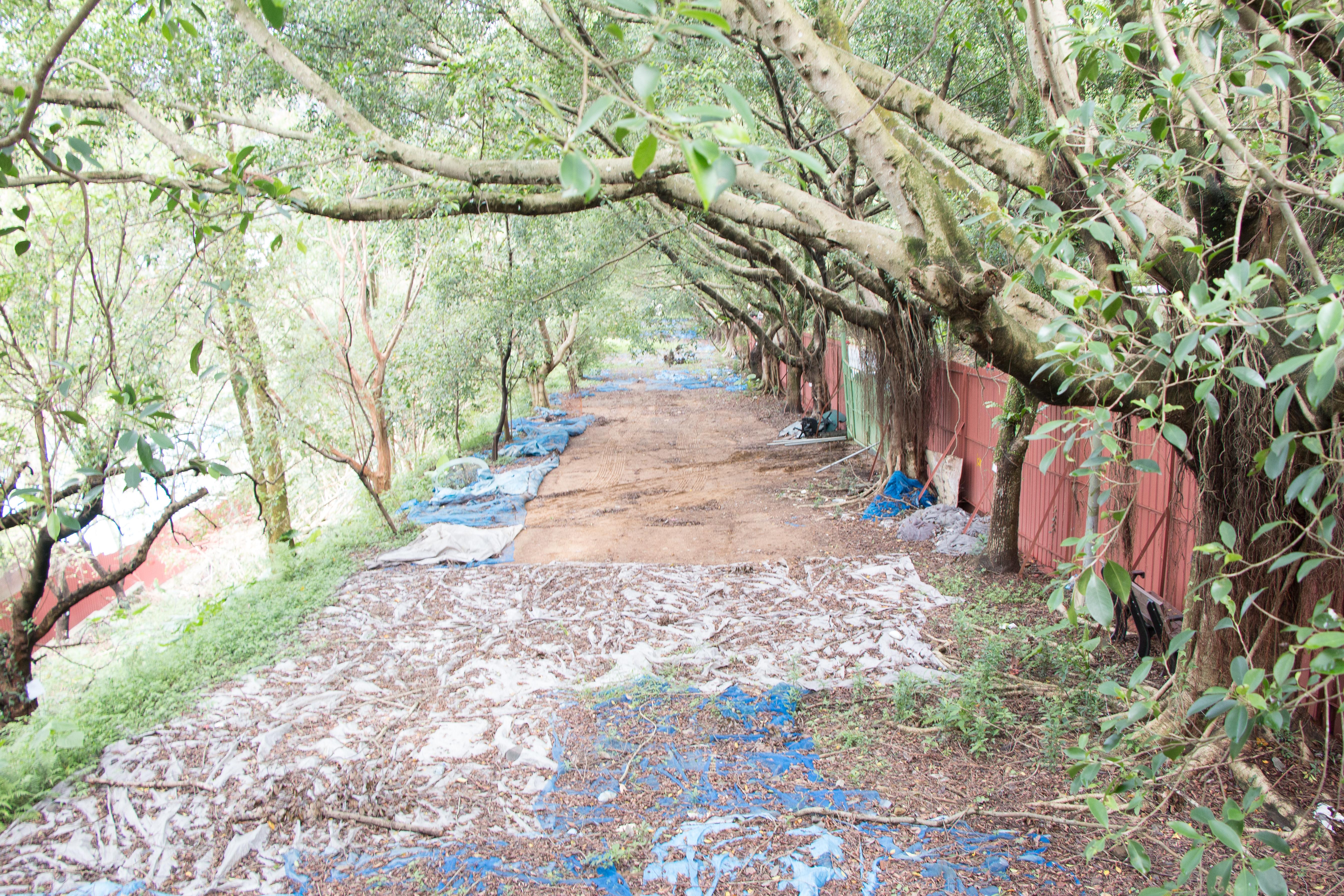 原先種植小樹的綠地,小樹已遭建商全數移除。攝影/李振均