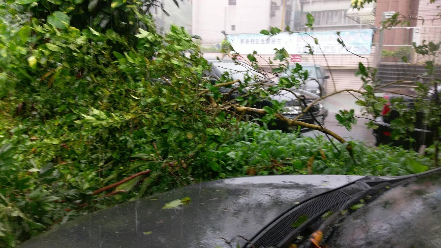 梅姬狂風造成樹木連根拔起,壓落在停靠在一旁的汽車上方
