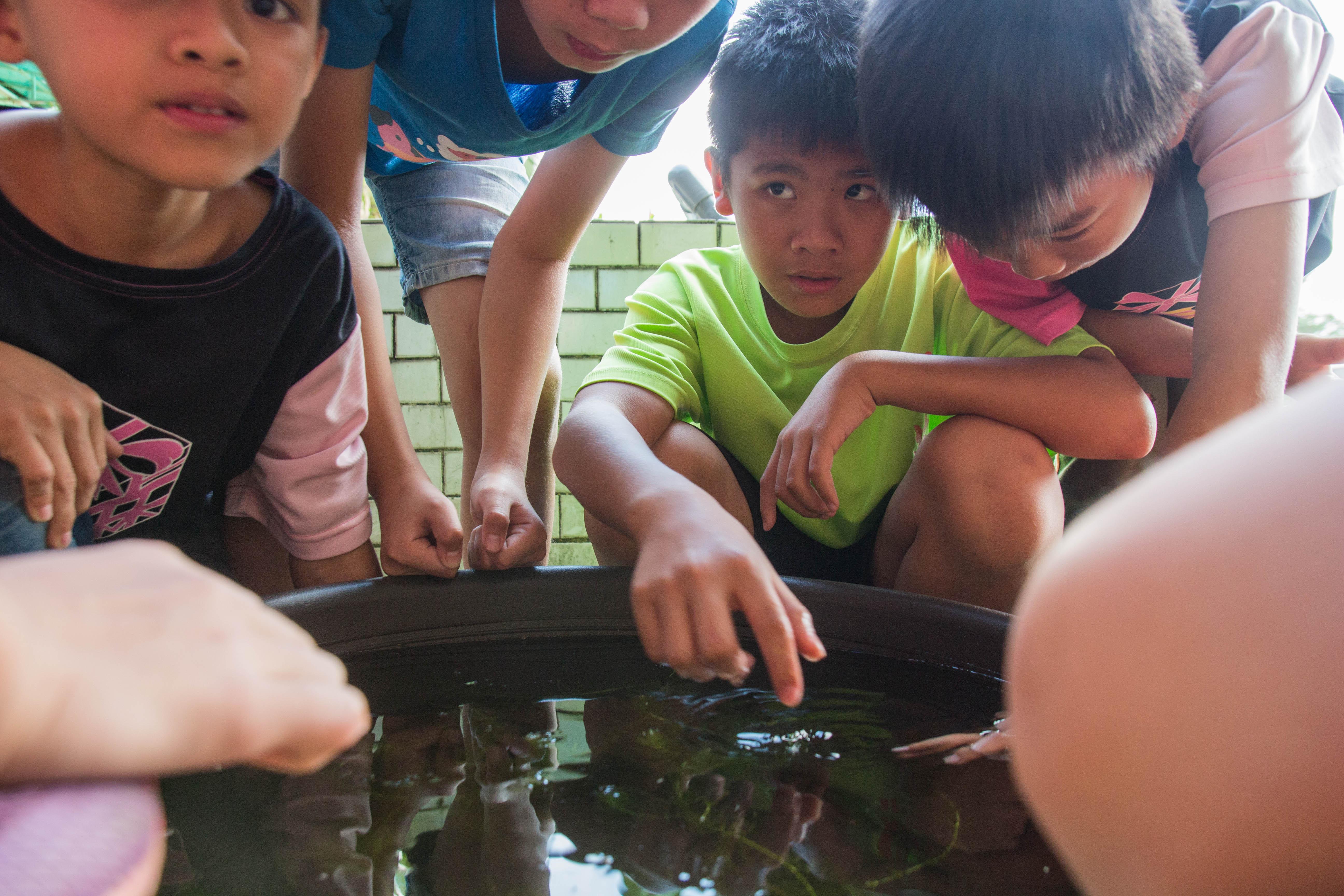 小朋友圍在魚池旁,一探青鱂魚苗和魚卵的樣貌 攝影 高子涵