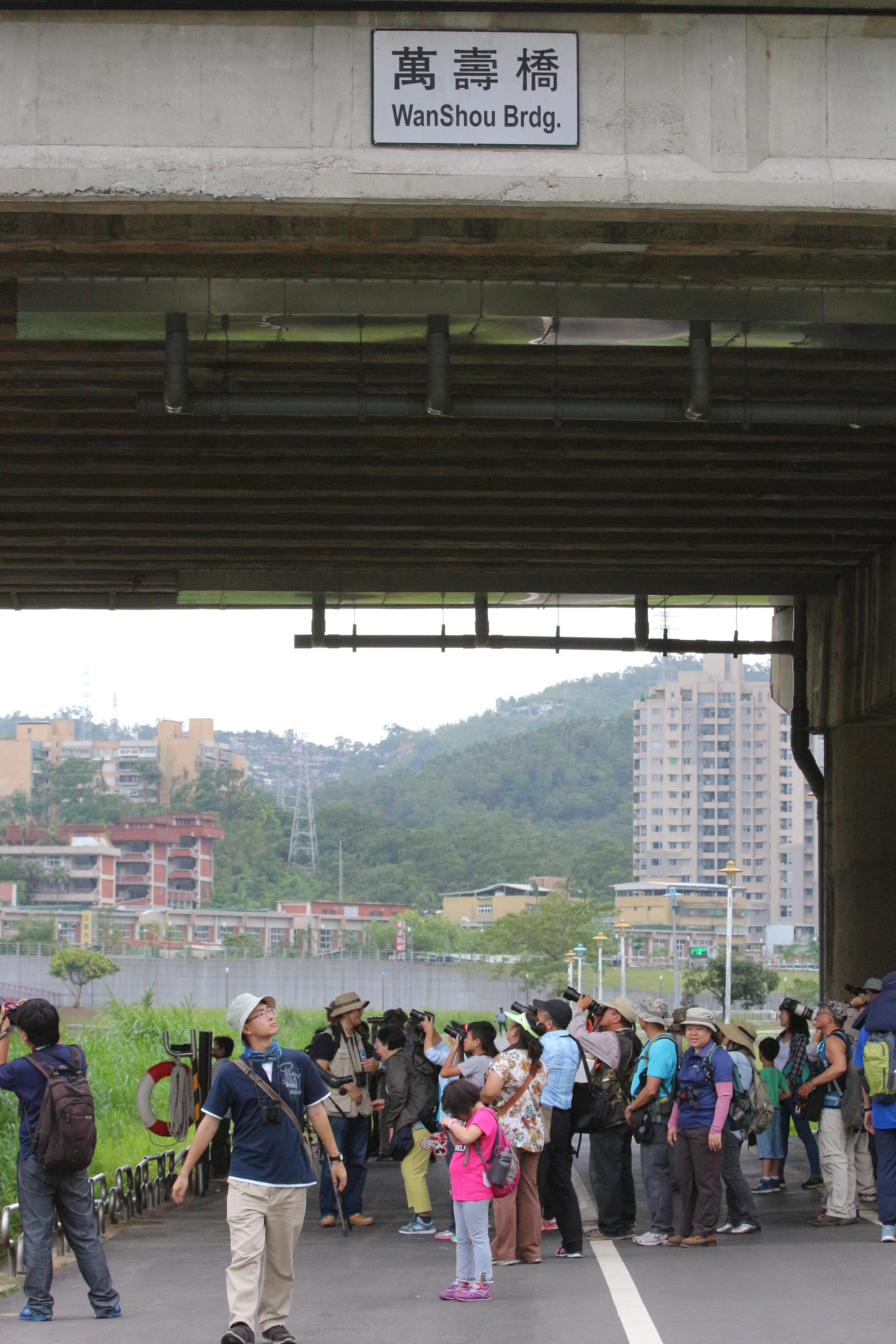 群聚在萬壽橋下賞鳥的鳥友們。 攝影/吳冠輝