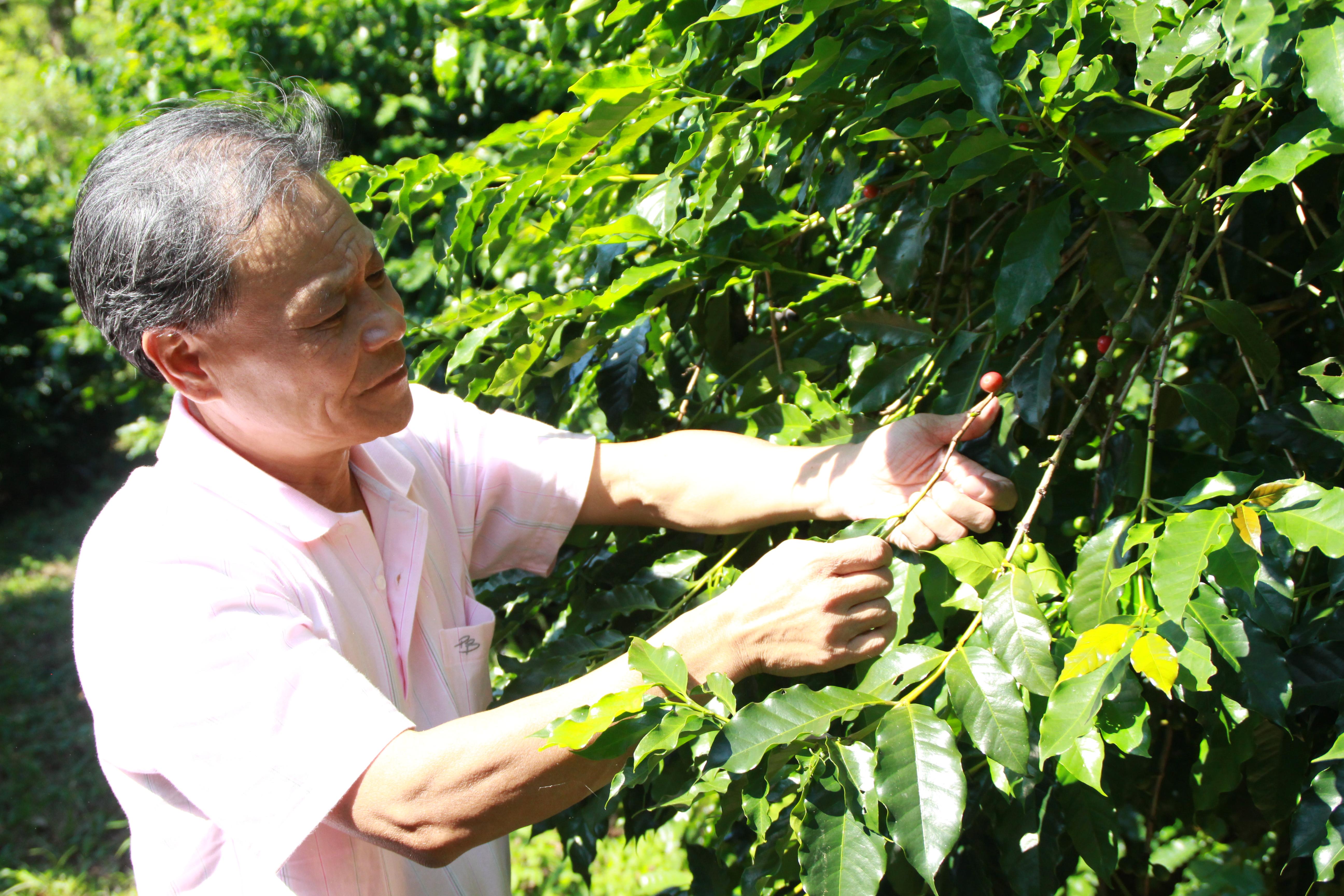 創辦人高勝福,用心栽種咖啡樹,並打造有機環境。攝影/邵永輝