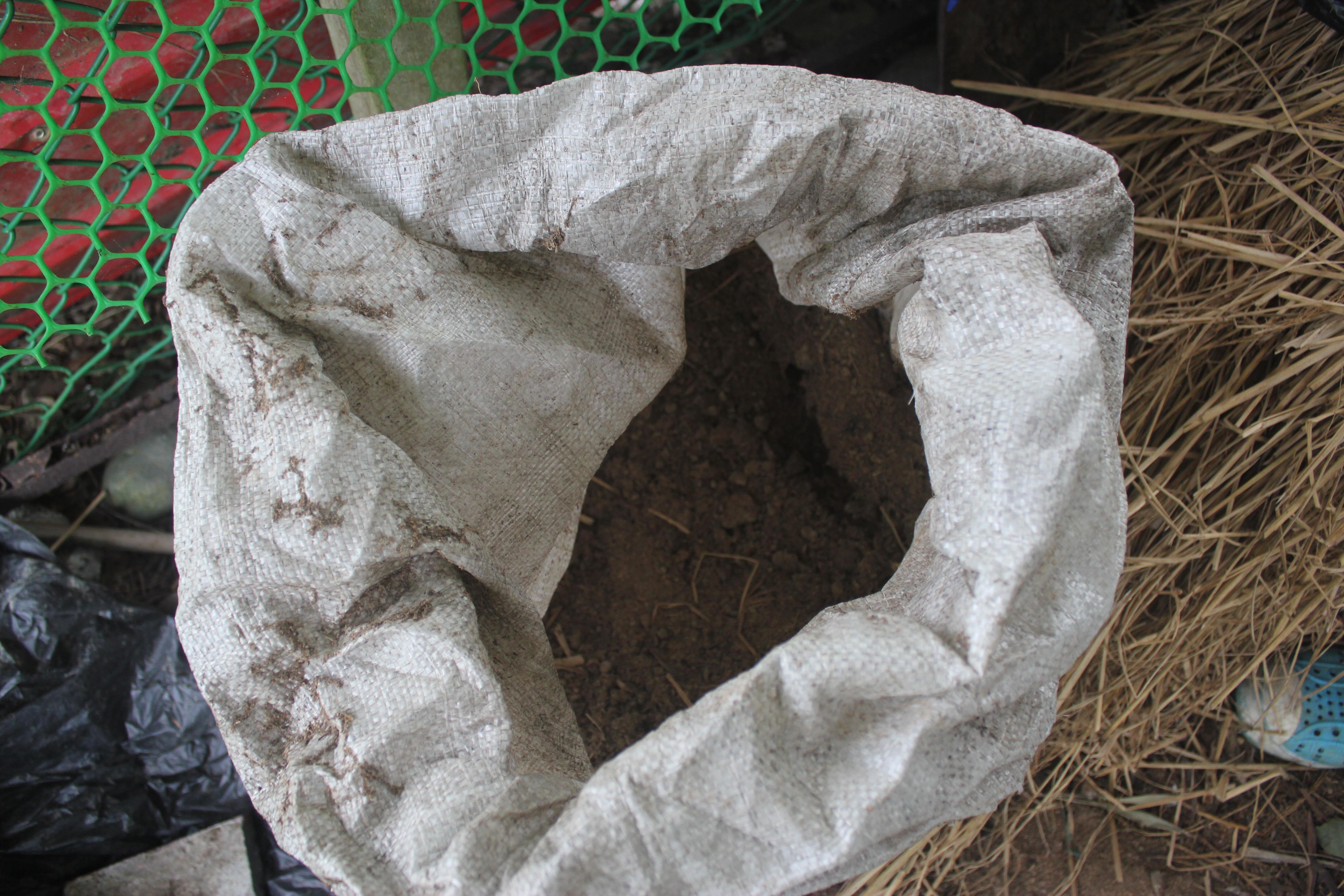 含有微生菌的土壤。攝影/林韋宏
