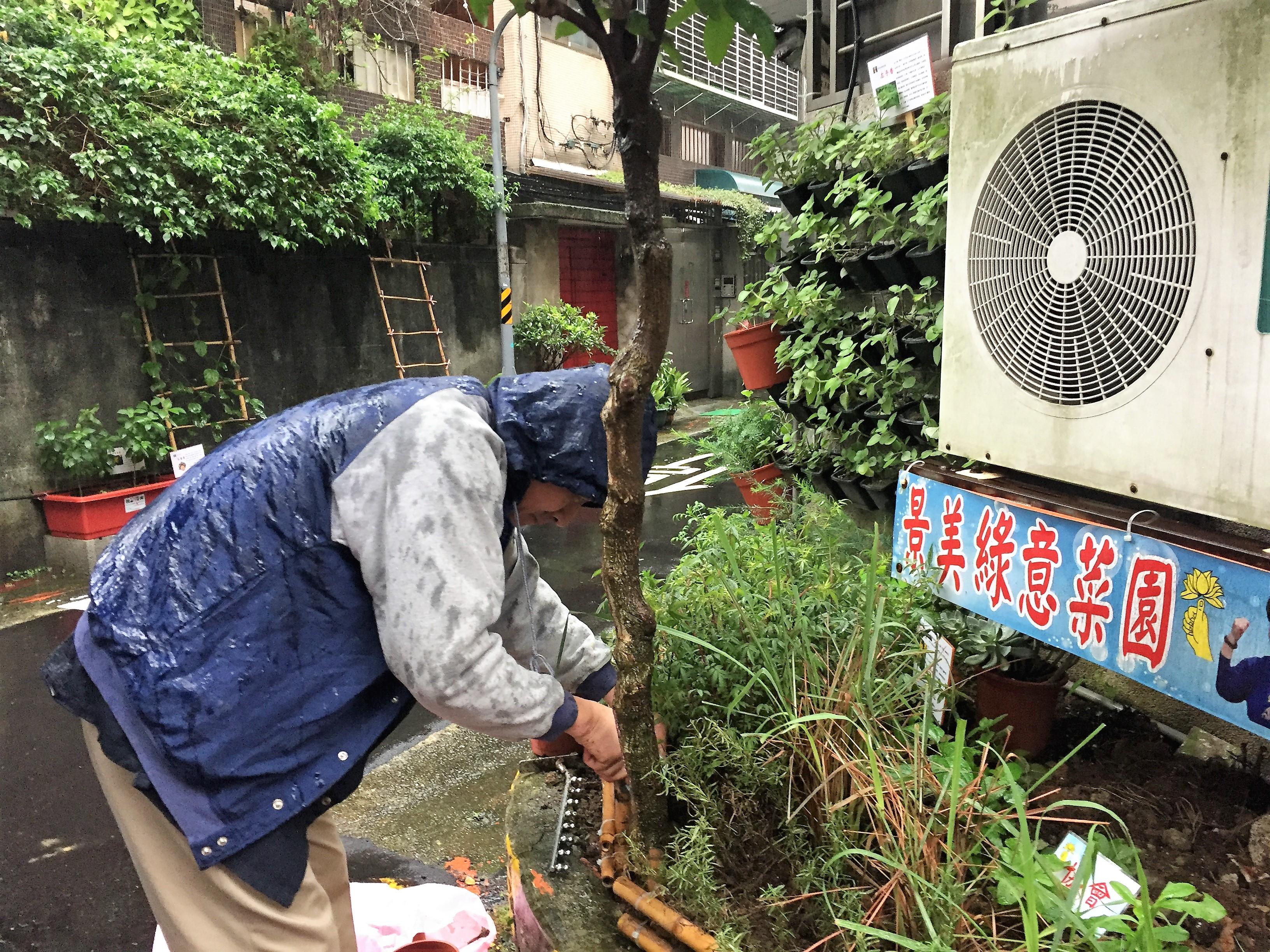 志工正在雨中進行植物的栽培。攝影/孔祥智
