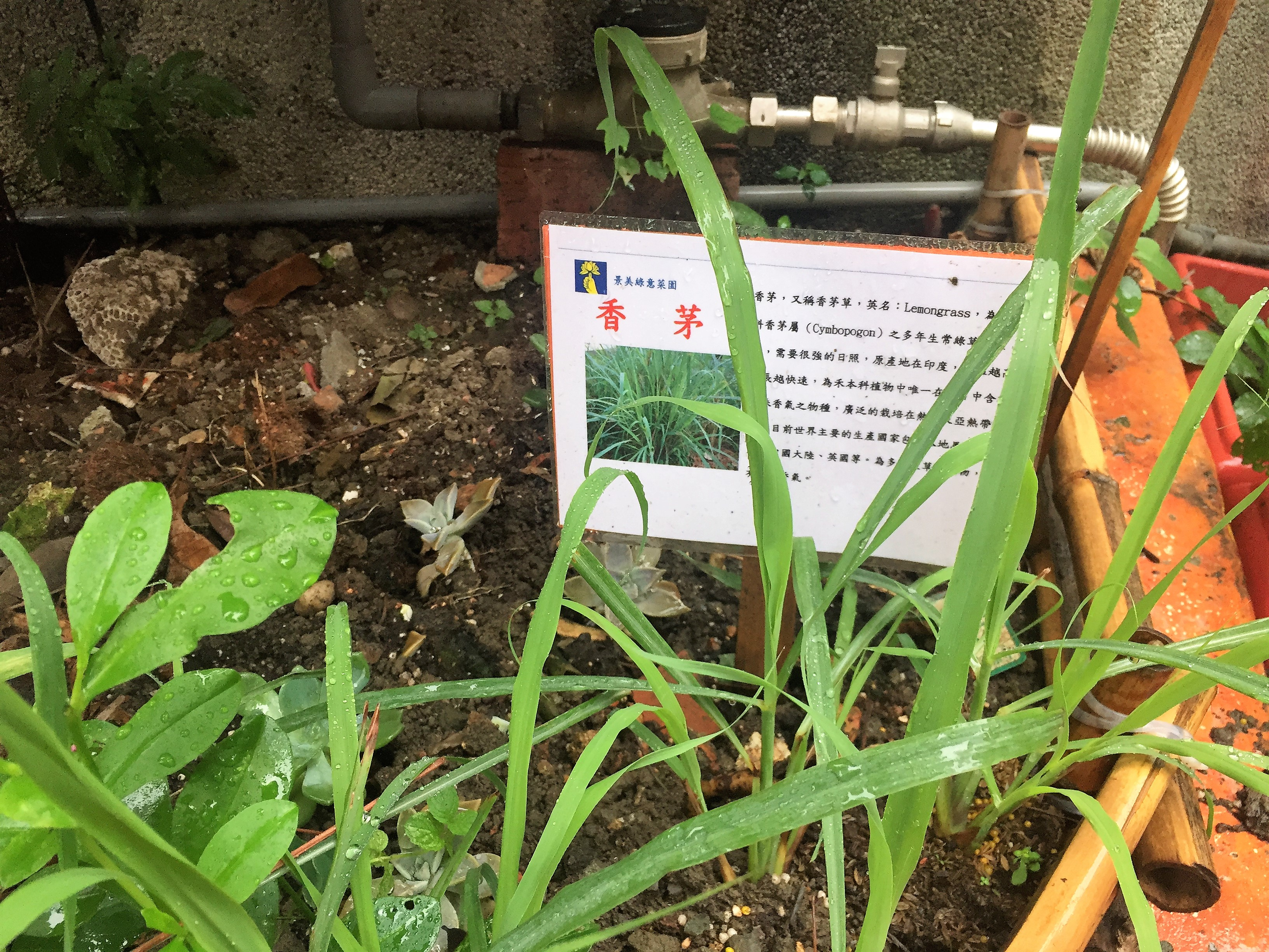 每一種植物旁邊都附有簡介,方便民眾認識。攝影/孔祥智