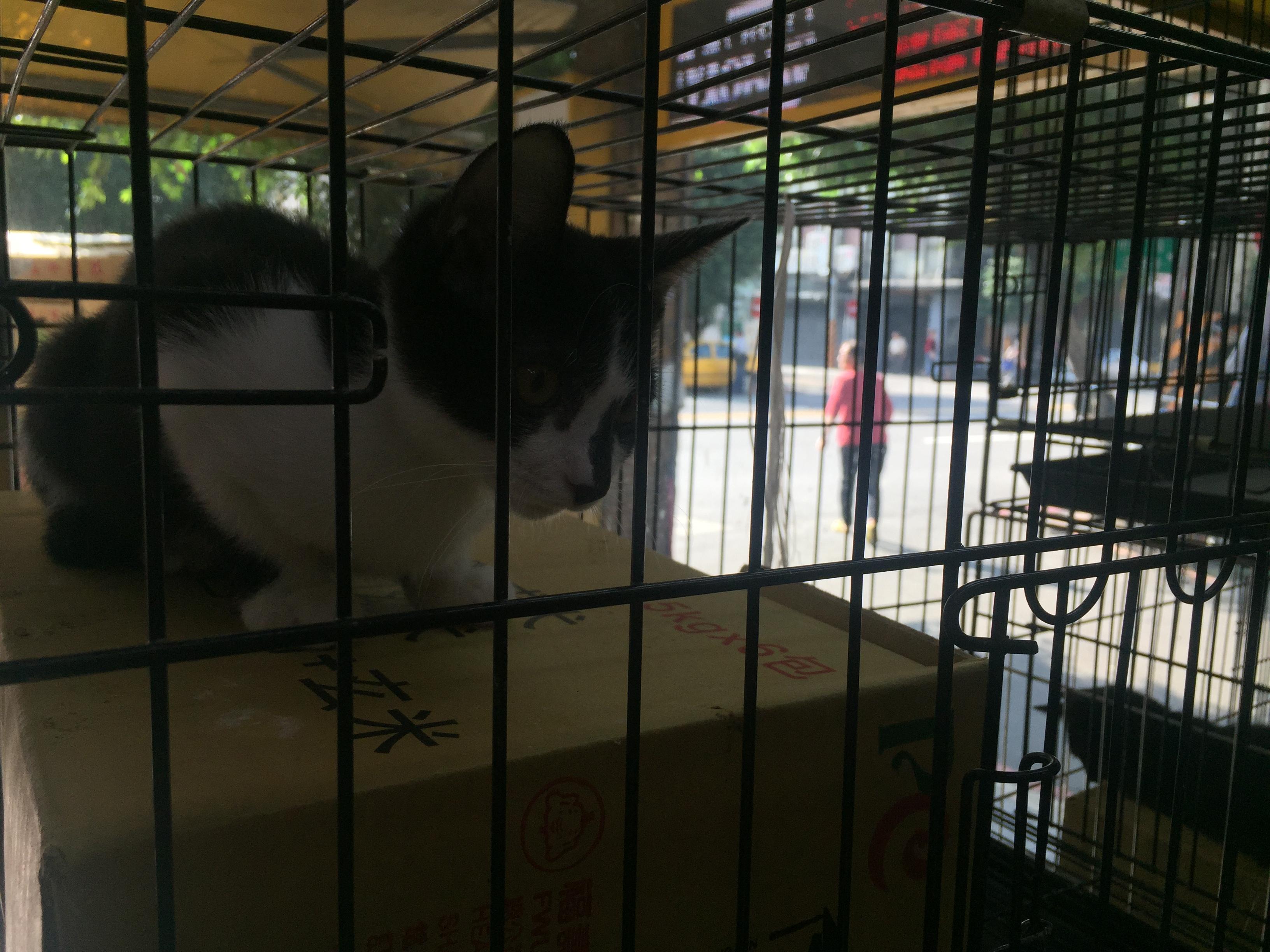 在籠內,眼睛炯炯有神的幼貓。攝影/潘幸暉