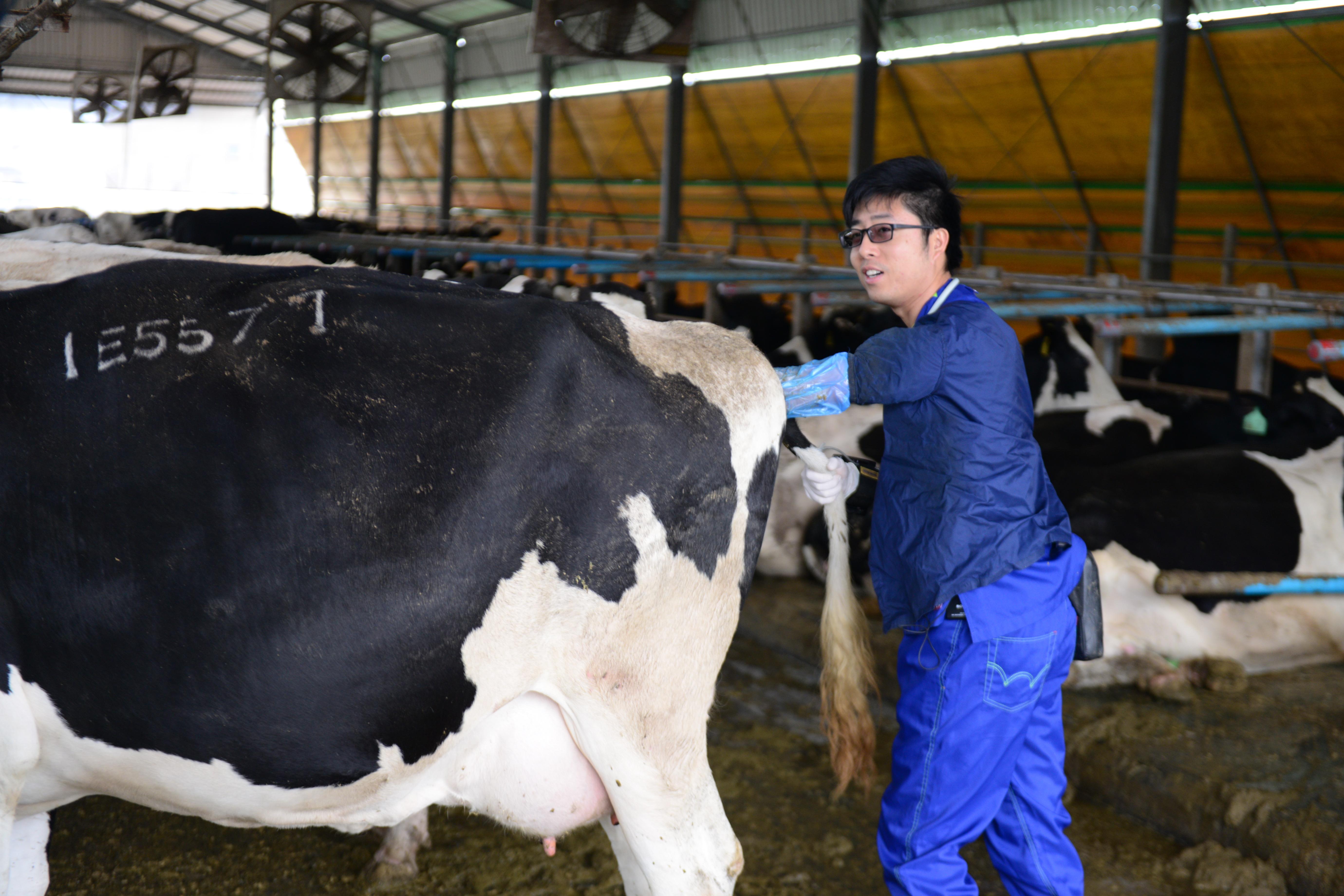 獸醫師龔建嘉在牧場細心呵護乳牛,並創立大動物獸醫培育基金。圖片來源/龔建嘉