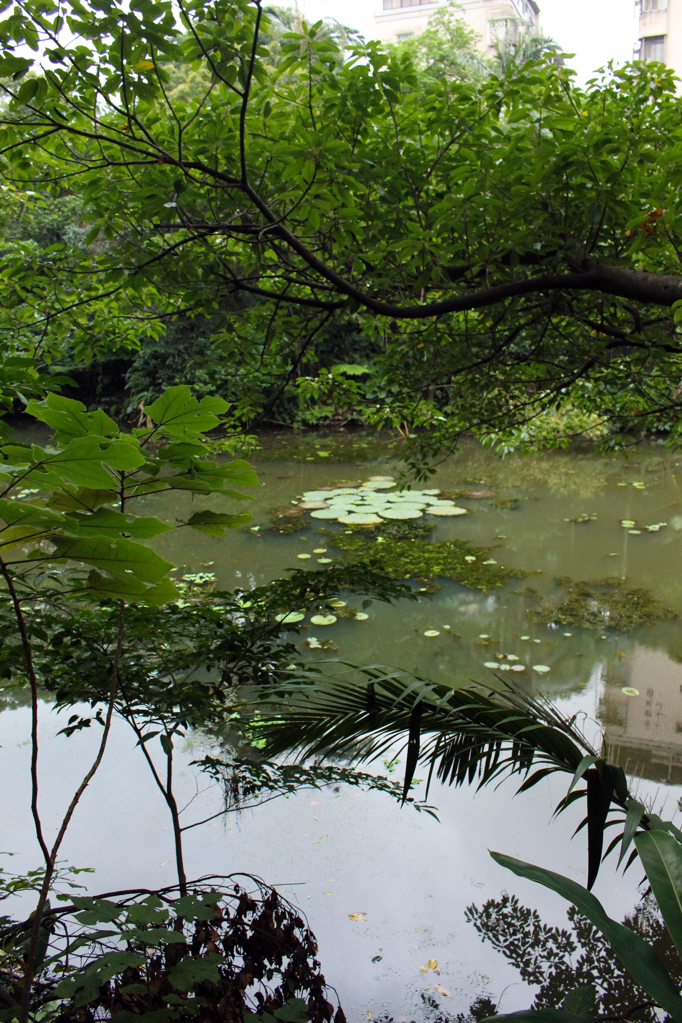 木柵公園萃湖一隅。湖內生態物種多樣,動植物豐富。攝影/鄭詠心