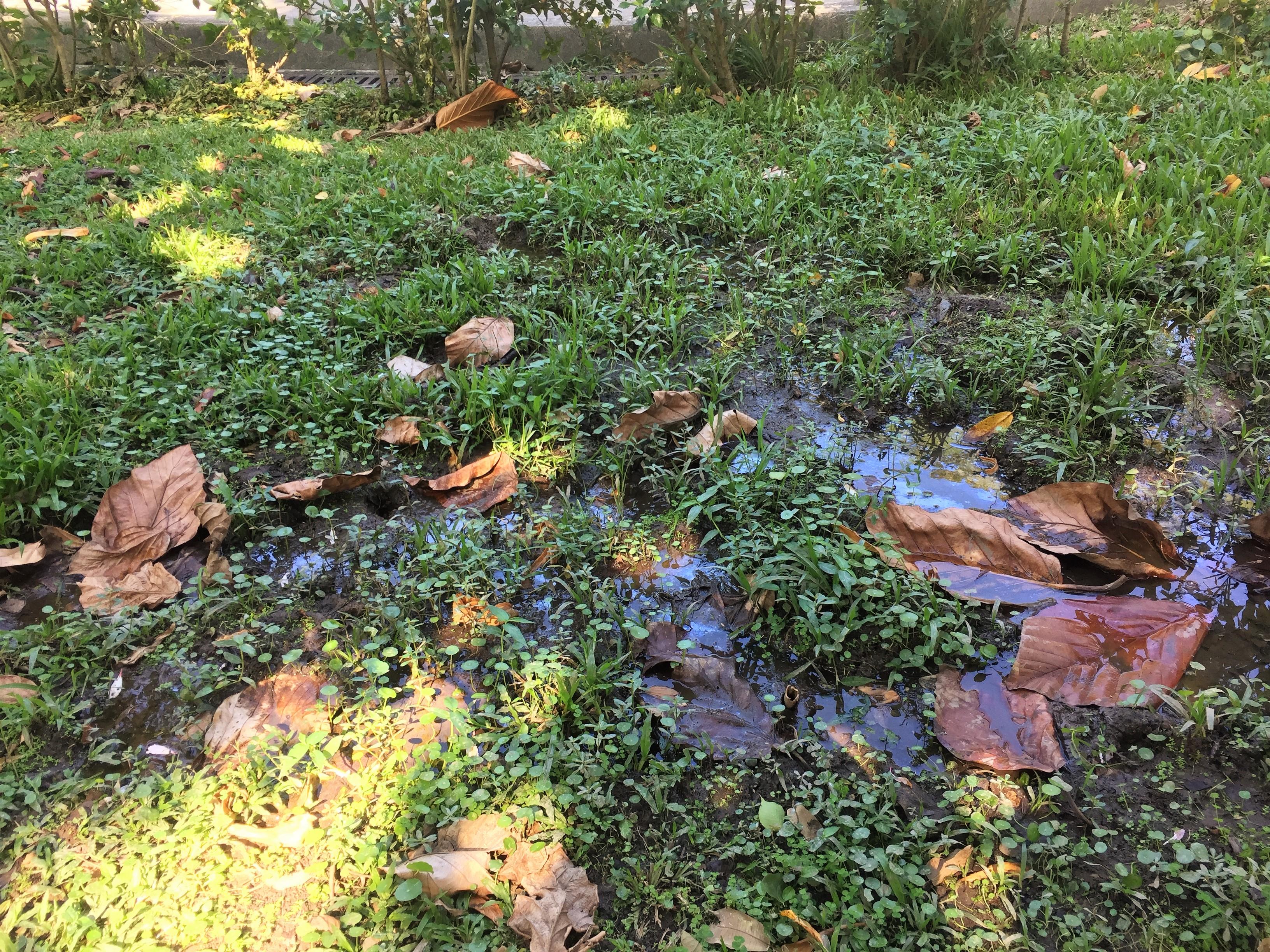萬慶公園的一塊「恆濕」的土地,計畫將其建造成生態池。攝影/孔祥智