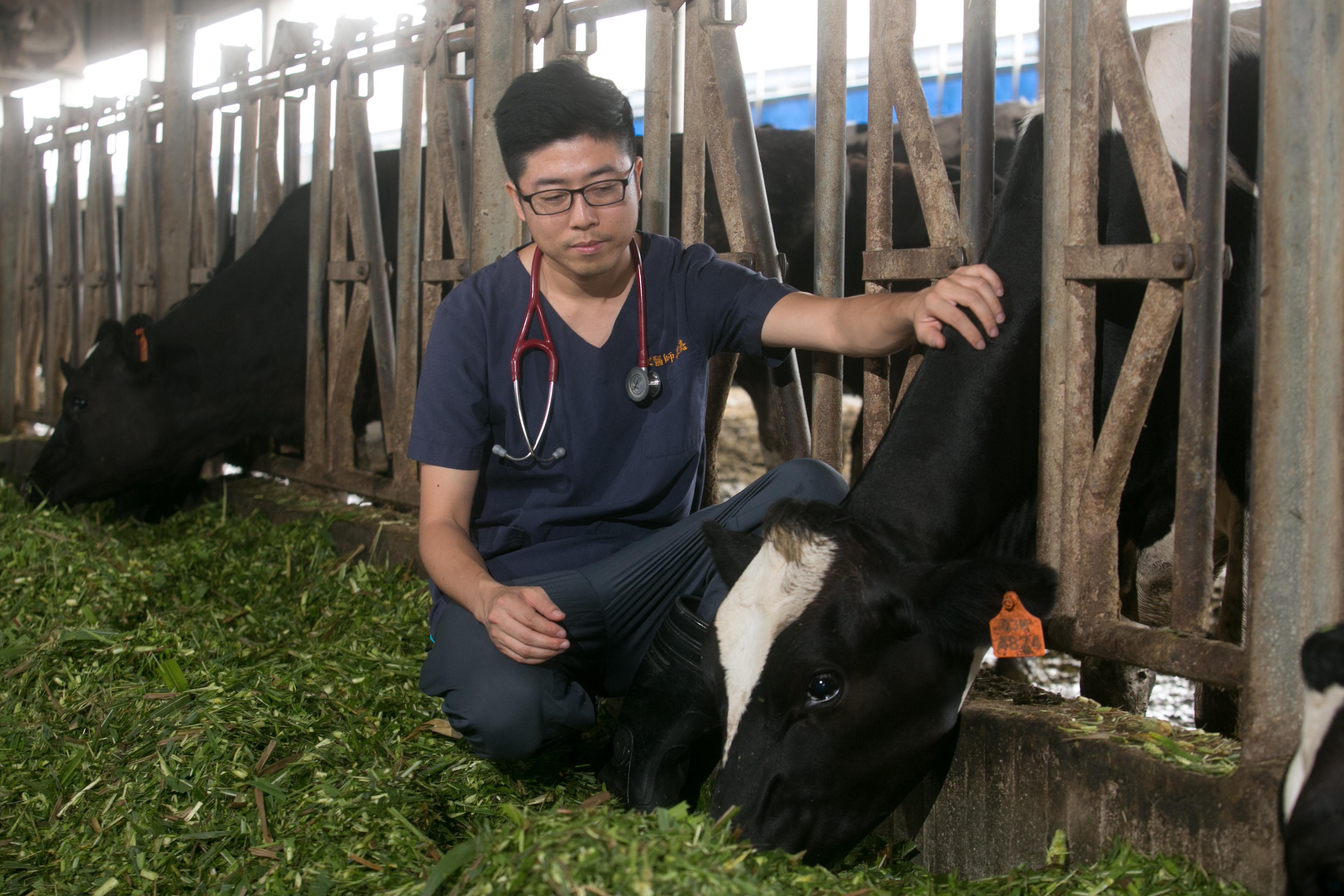 鮮乳坊創辦人龔建嘉在牧場替牛隻看診。圖片來源/龔建嘉