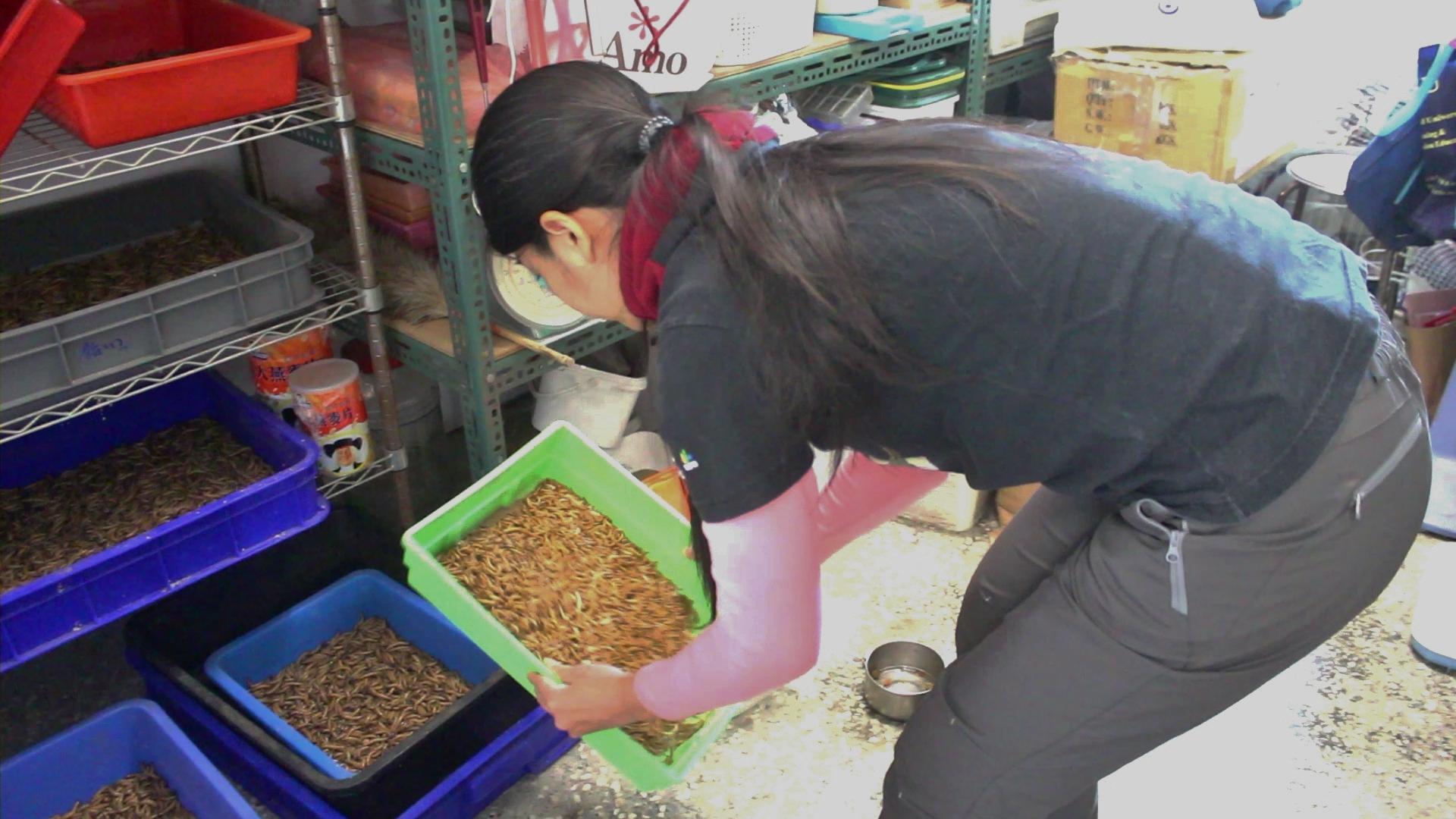 志工們依據鳥種不同搬取要餵食傷鳥的食物。 攝影/吳冠輝