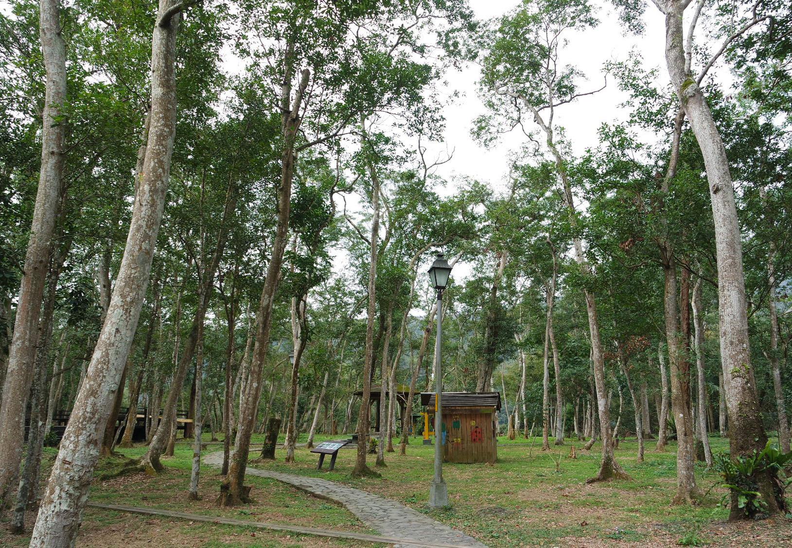 直潭國小校內的森林,是直潭國小學生學習生態課程的最佳資源。攝影/劉品彣