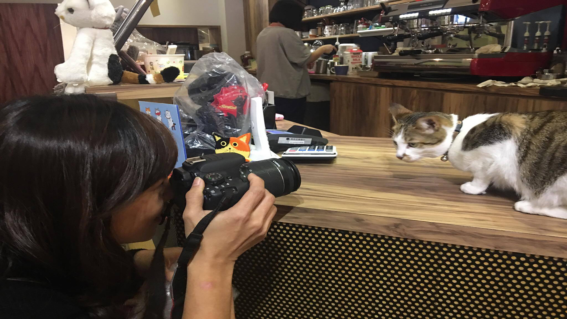 簡佩玲原本為一名愛貓的攝影師。攝影/鄭巧婷