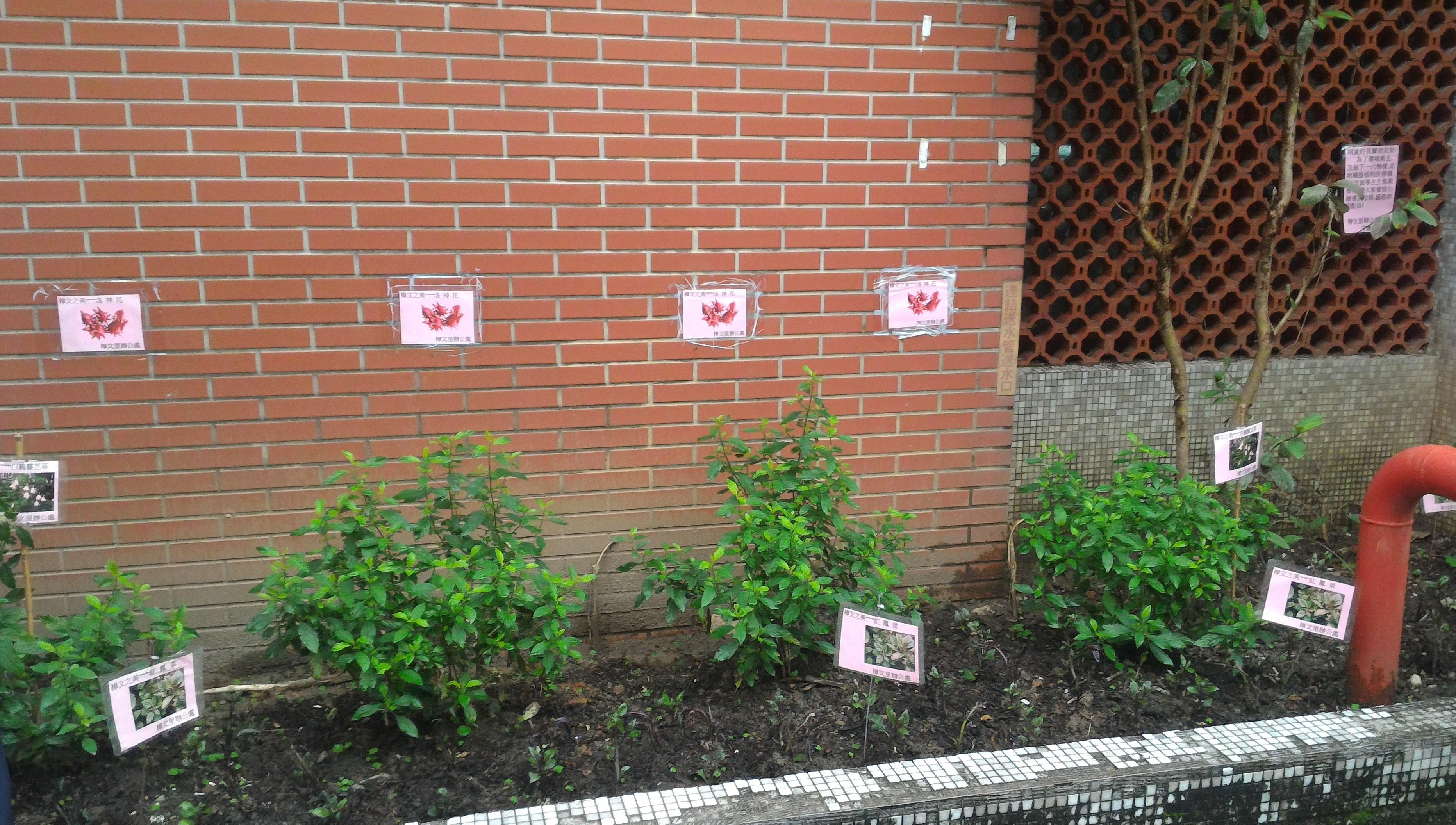 有別于其他區,第三區主要種植藥草及養生類植物。 攝影/黎海陽