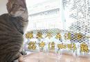 讓愛不再流浪 貓中途咖啡廳